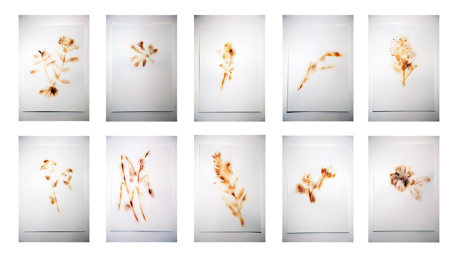 Alana Bartol, Invisible Impacts: Plants of Grassy Mountain, 2020. Heated milk on paper, 17.78 x 25.4 cm. Photo: blkarts.ca.